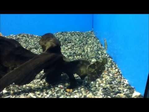 デンキウナギ発電実演と動かない魚 リーフフィッシュ