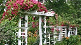 Arches, Pergolas. Trellis In The Garden.Арки, перголы. трельяжи в саду.