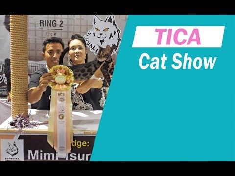TICA cat show , malang 11 nov 2018