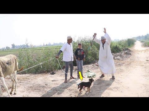 #5  شاهد الحاج مقطوش  لم القى المعزه بقت كلب !!صدقني سوف تضحك من قلبك😂