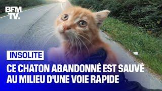 Ce chaton abandonné est sauvé par un motard au milieu d'une voie rapide
