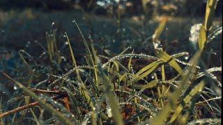 Beautiful nature green grass video