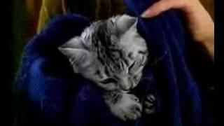 Kuklachev Cats Work / Whiskas Comercial (8)