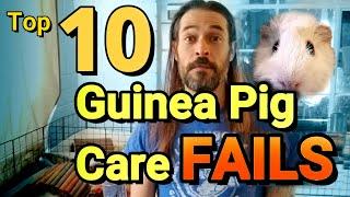 Top 10 Guinea Pig Care FAILS!
