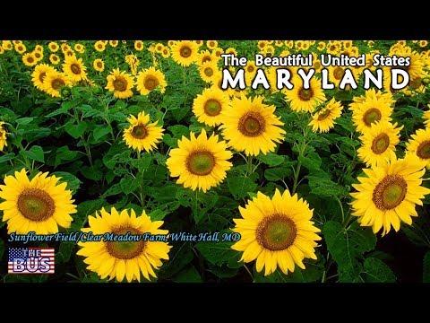 USA Maryland State Symbols/Beautiful Places/Song MARYLAND, MY MARYLAND w/lyrics