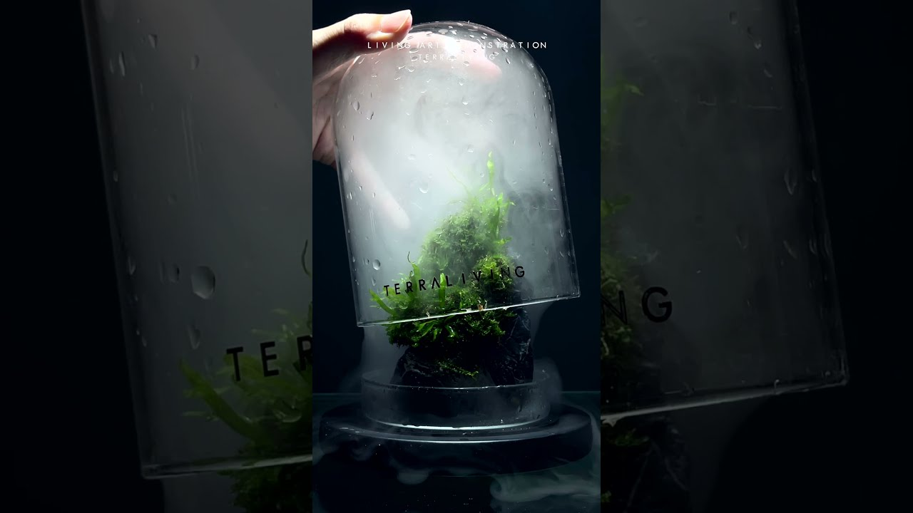 Satisfying Living Moss Art and Up-close view with Fog by TerraLiving