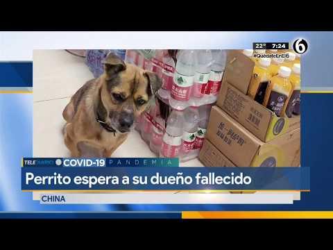 Perrito espera a su dueño afuera de hospital sin saber que murió por coronavirus