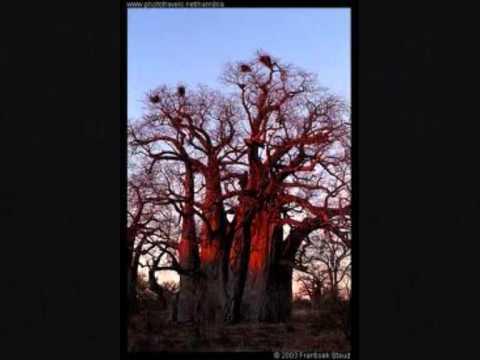 Minha terra, terra minha  _  Filipe Mukenga (filho de cabinda)