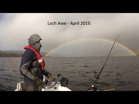 10lb+ Loch Awe Ferox Trout.