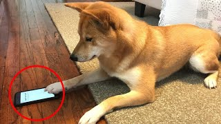 Can Dog Finger(Paw)Prints Unlock the iPhone?