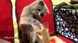 Смешные кошки -  подборка 2014 - Приколы с котами, ржака, коты, пугливые коты