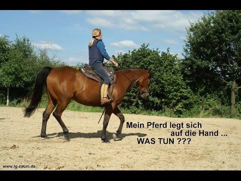 Mein Pferd legt sich auf die Hand, was tun?