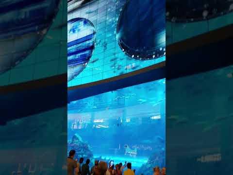 Entering The Dubai Mall Aquarium, March 2019