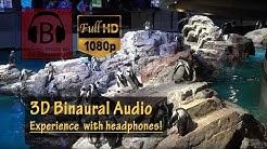 [HD, 3D Audio] New England Aquarium Complete Walkthrough POV – Boston, MA
