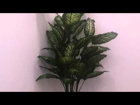 Ornamental plant in office