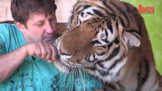living with tigers family highly risk