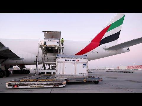 Champion Horses fly first class   Emirates SkyCargo