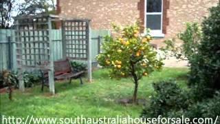 Backyard Citrus Garden