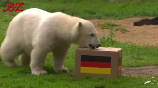WM: Im Bann der Tierorakel