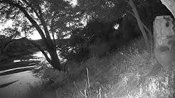 Africam - Olifants River Live Stream