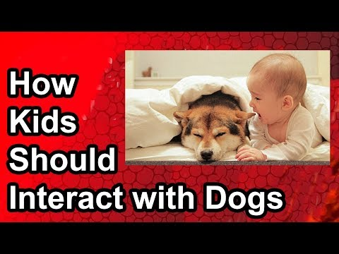 babies-and-dogs:-how-your-kids-should-interact-with-dogs