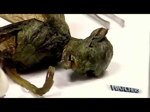 Alien creature found by scientists in Mexico