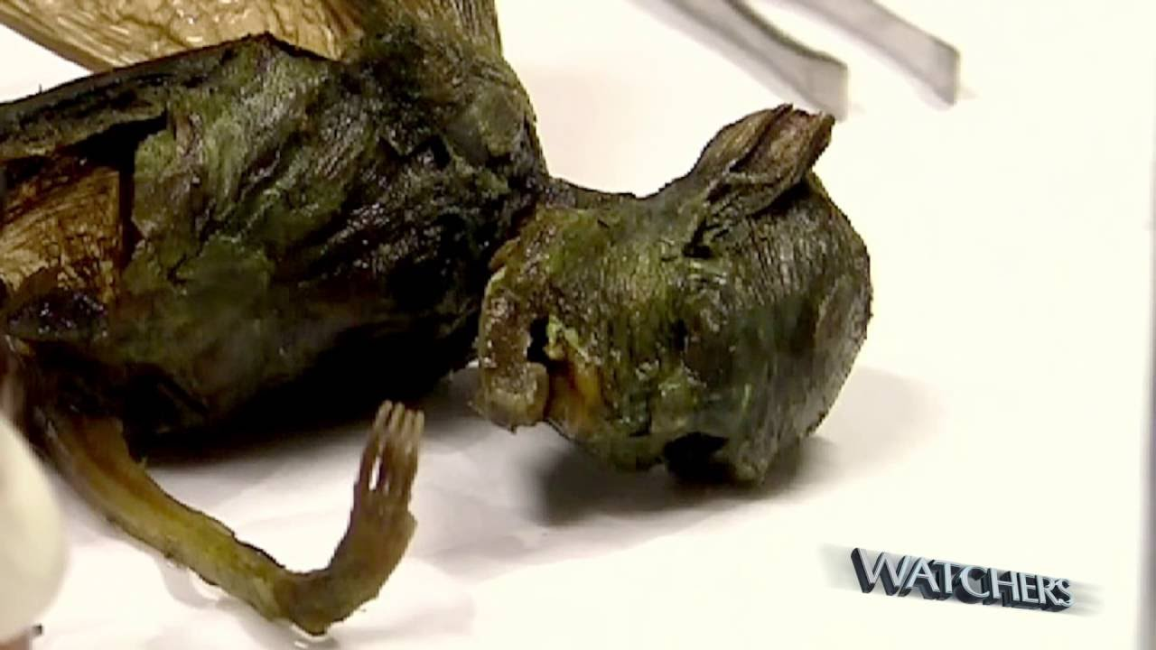 Alien creature found by scientists in Mexico - YouTube Real Alien Found Alive
