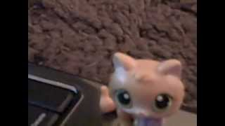 My New LPS Kittens i am getting off Ebay!!!!!!!!!!!!!!!!!