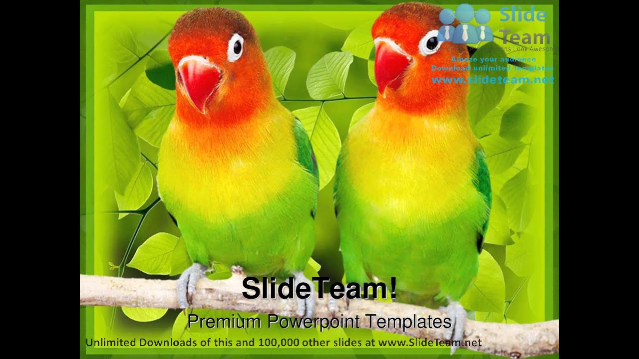 Love birds parrots animals powerpoint templates themes and love birds parrots animals powerpoint templates themes and backgrounds ppt layouts youtube alramifo Choice Image