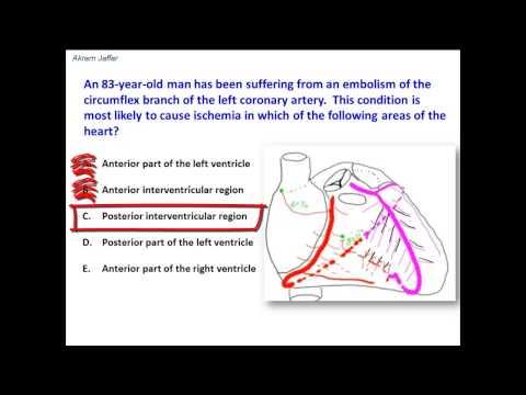 Distribution of the circumflex branch of left coronary artery