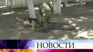 ВТюмени проходят соревнования кинологов иих подопечных собак напервенство войск Росгвардии.