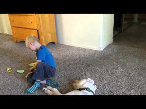 Teaching the puppy to write his name