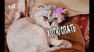 влог: У котов сонный день! Билю трясло всю ночь из-за грозы.