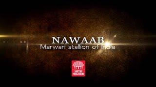 Nawaab: Marwari Stallion of India, Book 1, The Great Quake