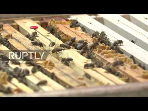 Germany: First honey harvest from Berlin's bahn-side bees