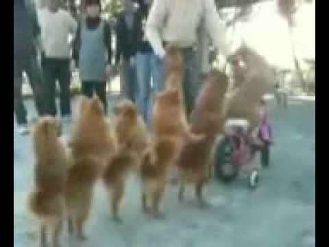 Funny - Circus Dog Show