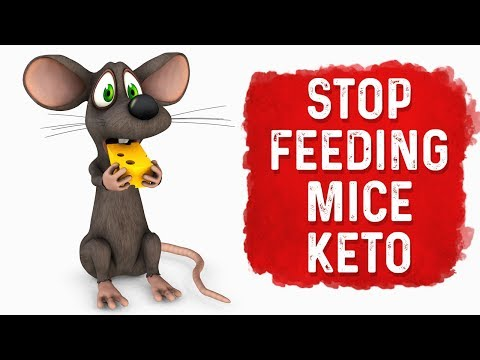 Stop Feeding Your Pet Mice Keto (Ketogenic Diet)