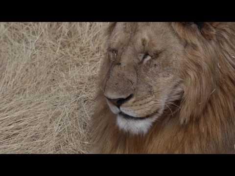 Tarangire Manyara Ngorongoro