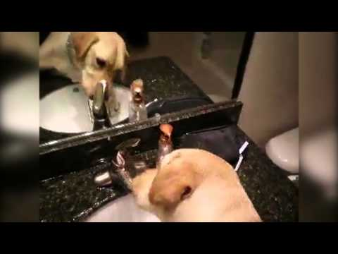 Thirsty Dog Turns On Bathroom Sink