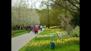 Le Keukenhof  en avril 2012 - Hollande