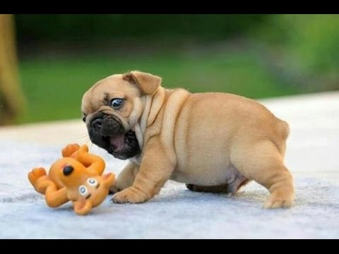 FUNNY Dogs Video: Cute Puppies that makes you smile!!!