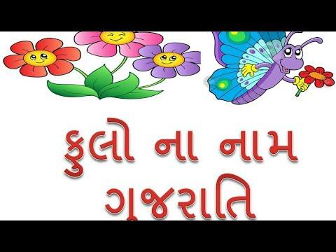 New Gujarati Flowers Name Photo Video English With Gujarati Youtube