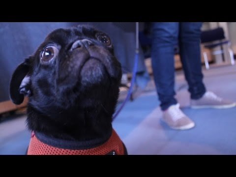 Cambridge Students for Mental Health: Animal Assisted Therapy