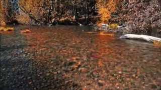 Ambientium - Fall
