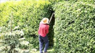 Garden | Gardening | Hedge | Hedging Plants - Gate