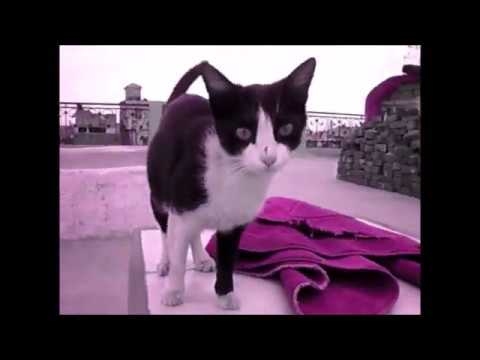 Funny Cats and Kittens Meowing Compilation 2018 / CH AHMED
