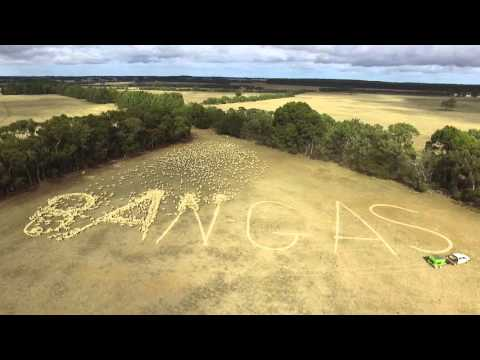 2000 Sheep Spell Out Opposition to Onshore Gas in Victoria