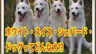 ペットで犬を飼おうと迷っている方へ〜ホワイト・スイス・シェパード・...