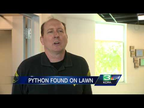 5-foot ball python found on Arden-area lawn