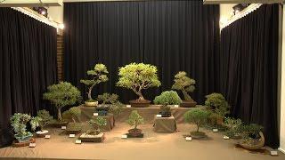 YVBS Bonsai Show 2014